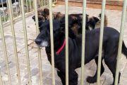Zbiórka darów dla zwierząt ze schroniska
