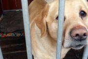 Pomoc psom i kotom